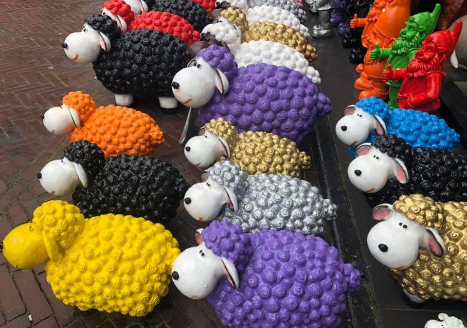 Die armen Schafe !
